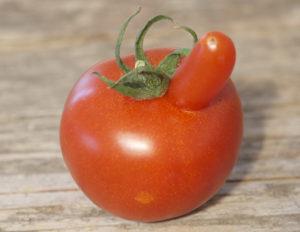 hochnaesige-bio-tomate